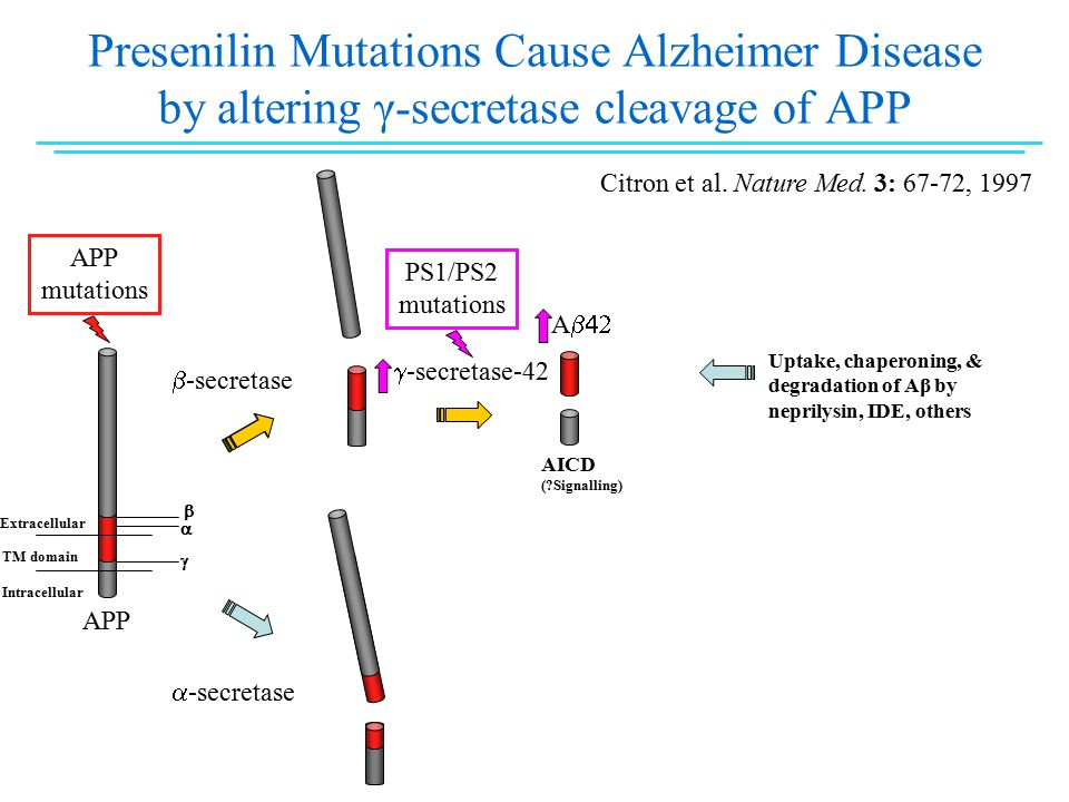 Presenilin Mutations Cause Alzheimer Disease by altering γ-secretase cleavage of APP  -secretase  -secretase-42 A  AICD ( Signalling)  -secretase Extracellular TM domain Intracellular APP mutations APP    Citron et al.