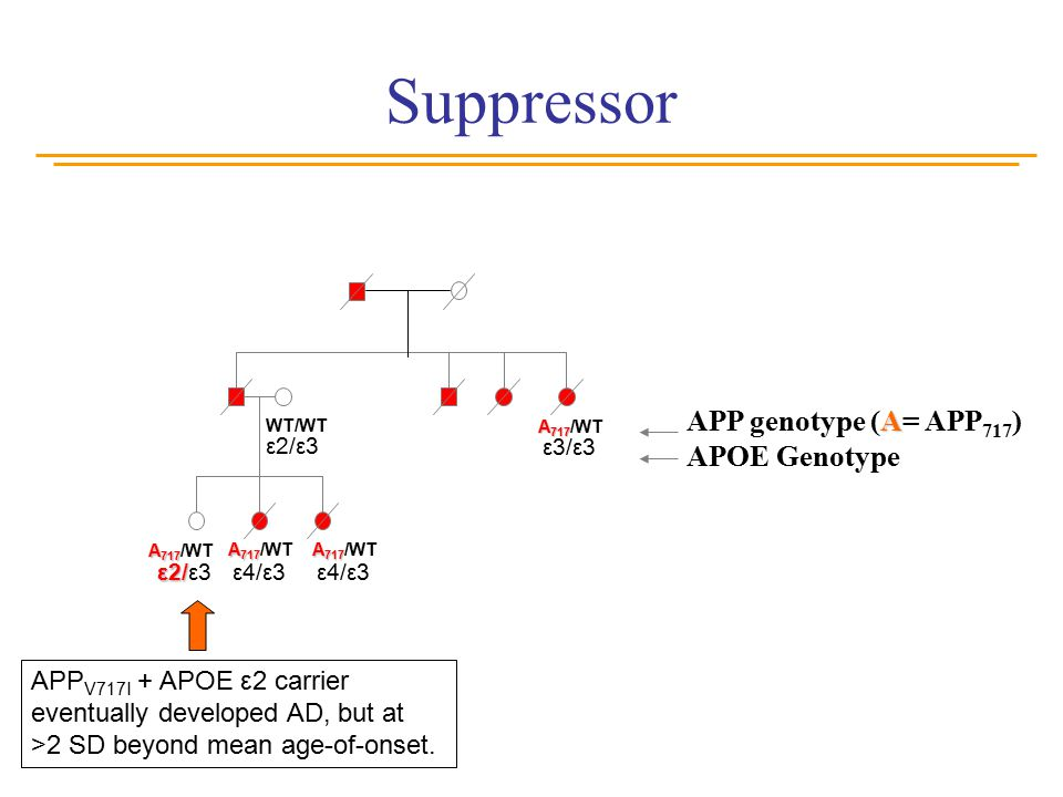 Suppressor A APP genotype (A= APP 717 ) APOE Genotype A 717 A 717 /WT WT/WT ε2/ε3 ε3/ε3 ε4/ε3 ε2/ ε2/ε3 Elderly (>65yrs old) asymptomatic carrier of A