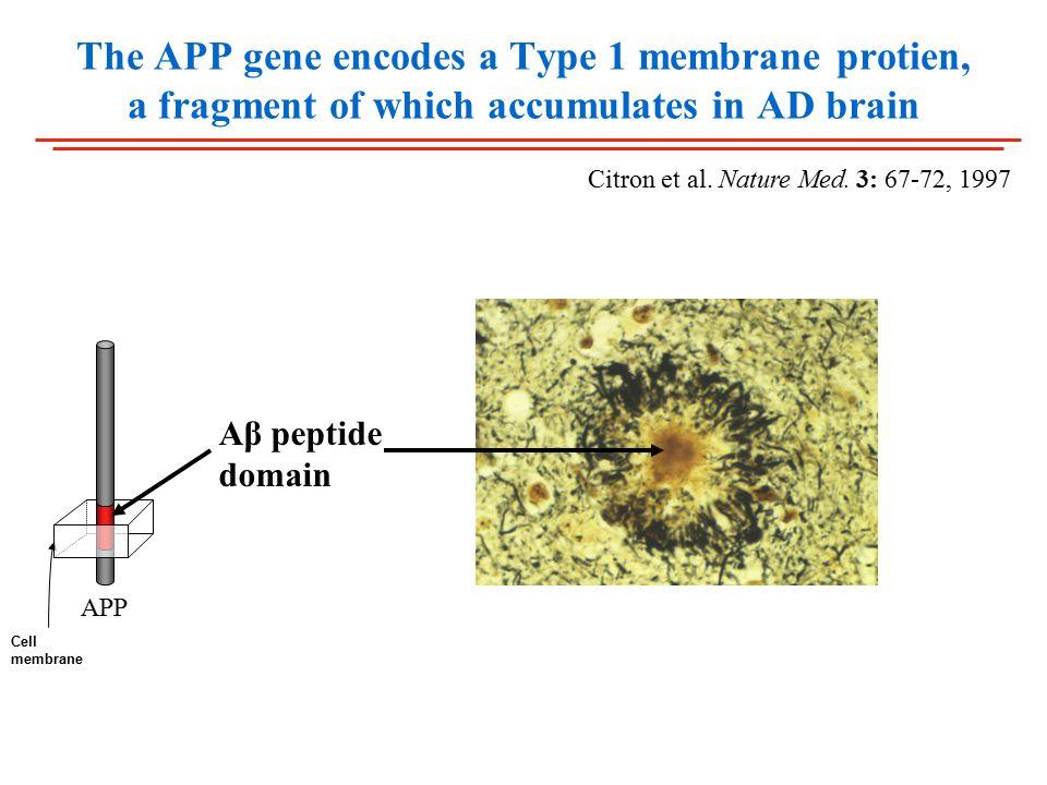 The APP gene encodes a Type 1 membrane protien, a fragment of which accumulates in AD brain Citron et al.