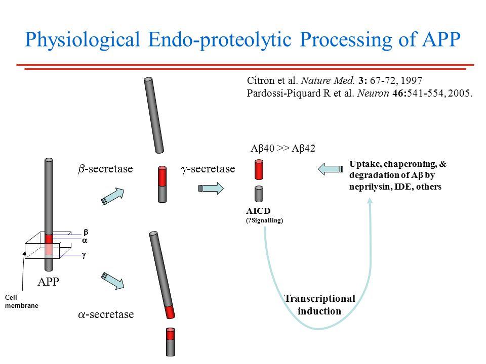 Physiological Endo-proteolytic Processing of APP  -secretase  -secretase Aβ40 >> Aβ42 AICD ( Signalling)  -secretase Uptake, chaperoning, & degradation of Aβ by neprilysin, IDE, others APP    Cell membrane Transcriptional induction Citron et al.