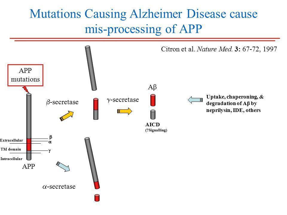 Mutations Causing Alzheimer Disease cause mis-processing of APP  -secretase  -secretase AβAβ AICD ( Signalling) Extracellular TM domain Intracellular APP mutations APP    Citron et al.