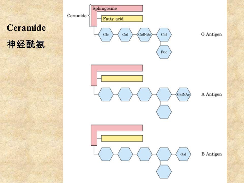 Ceramide 神经酰氨