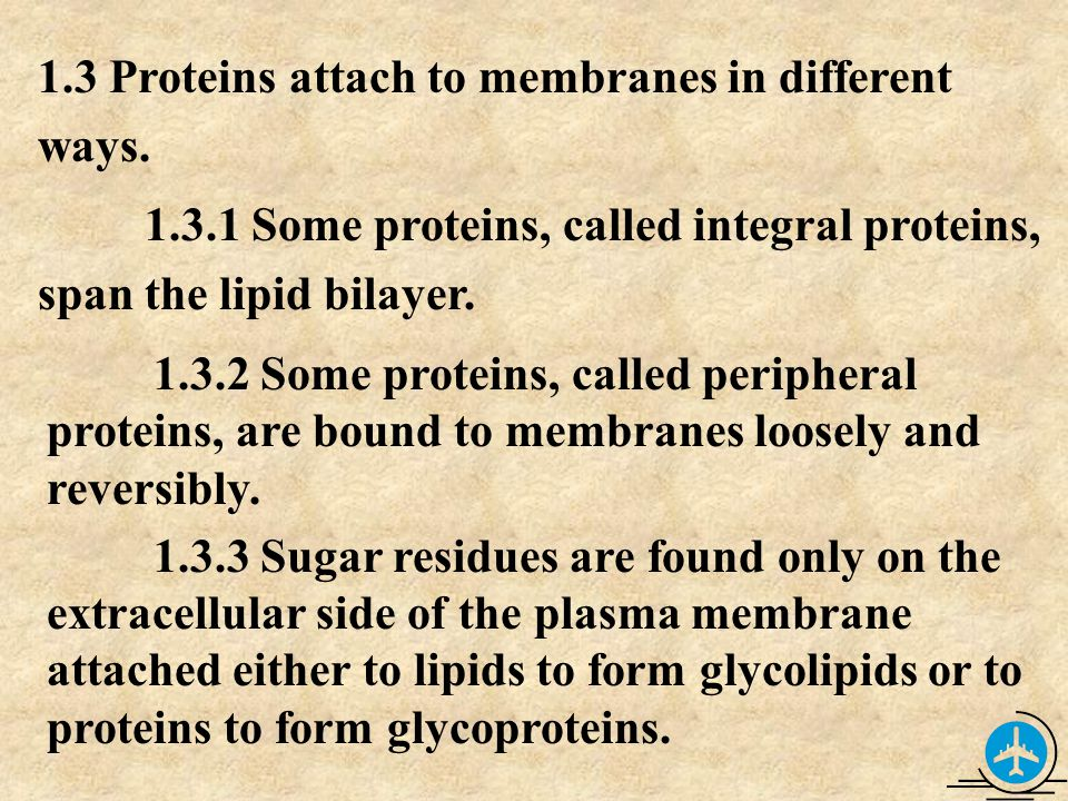 1.3 Proteins attach to membranes in different ways.