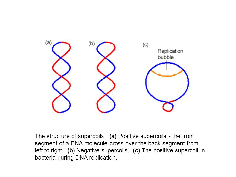 Changes in the susceptibility of S.