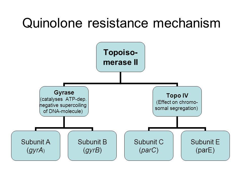 Mutations in gyrA QRDR resistance in Gram-negatives Mutations in parC QRDR resistance in Gram-positives