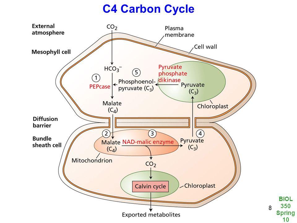 BIOL 350 Spring 10 8 C4 Carbon Cycle