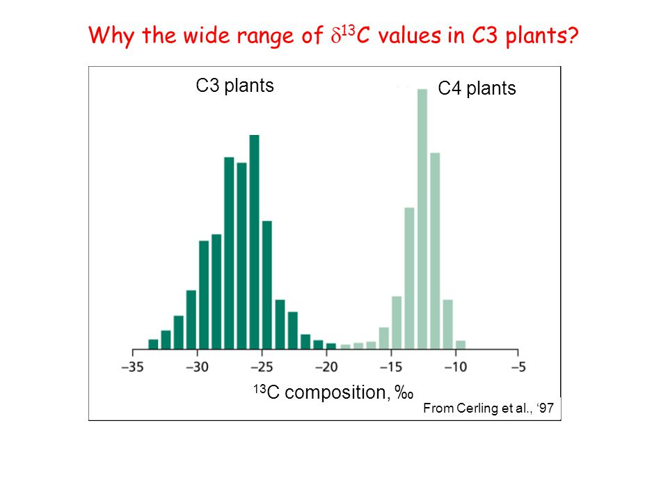 13 C composition, ‰ C3 plants C4 plants From Cerling et al., '97 Why the wide range of  13 C values in C3 plants?