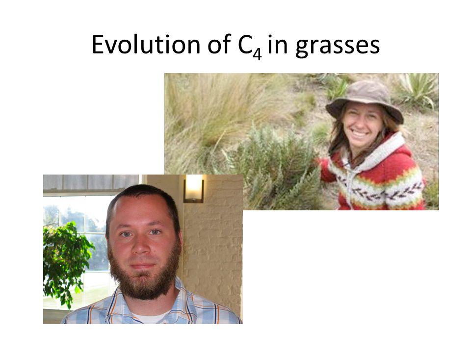Evolution of C 4 in grasses