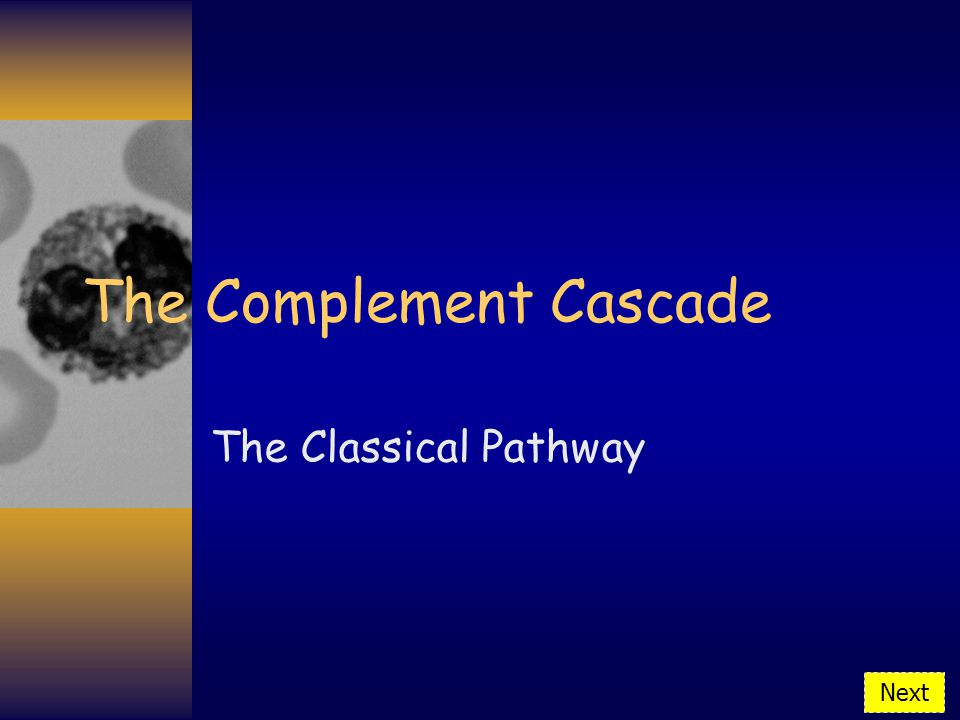 The Complement Cascade The Classical Pathway Next