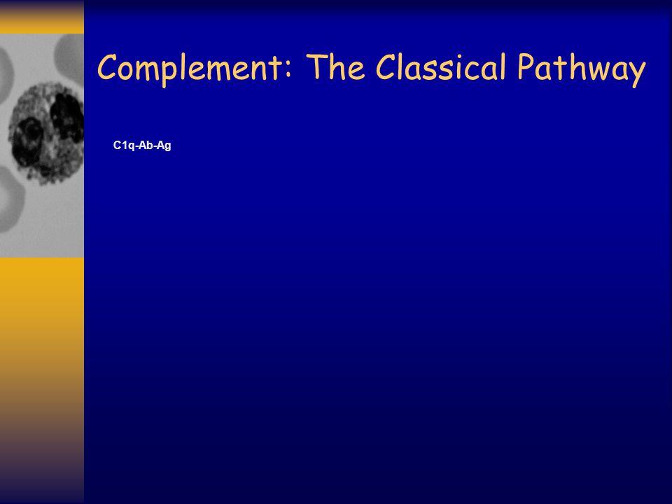 Complement: The Classical Pathway C1r-C1s C1q-Ab-Ag C1r-C1s C1q/antibody/antigen complex activates C1r (bound to C1s) Next