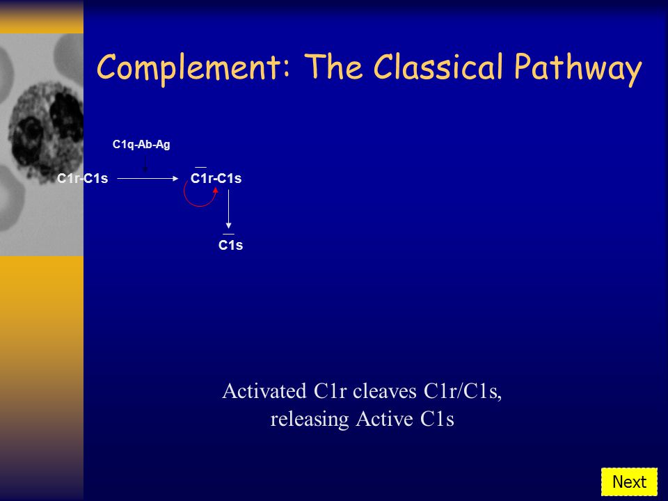 Activated C1r cleaves C1r/C1s, Complement: The Classical Pathway C1r-C1s C1q-Ab-Ag C1r-C1s releasing Active C1s C1s Next