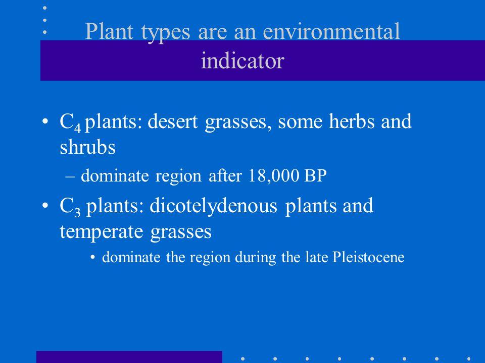 Current distribution of C 4 plants