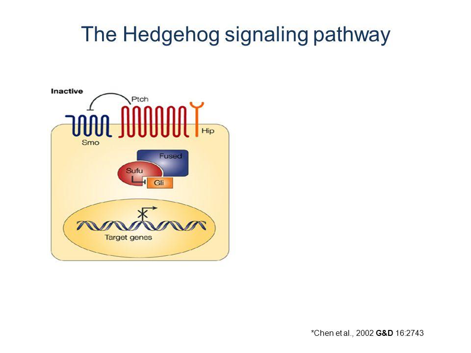 *Chen et al., 2002 G&D 16:2743 The Hedgehog signaling pathway