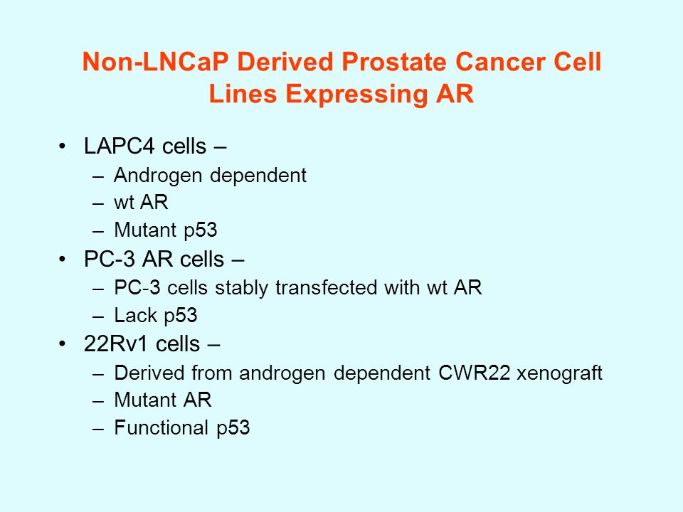 Non-LNCaP Derived Prostate Cancer Cell Lines Expressing AR LAPC4 cells – –Androgen dependent –wt AR –Mutant p53 PC-3 AR cells – –PC-3 cells stably transfected with wt AR –Lack p53 22Rv1 cells – –Derived from androgen dependent CWR22 xenograft –Mutant AR –Functional p53