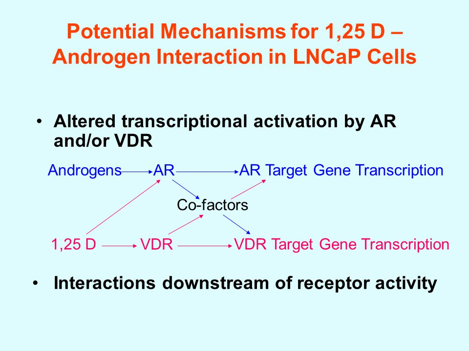 Potential Mechanisms for 1,25 D – Androgen Interaction in LNCaP Cells Altered transcriptional activation by AR and/or VDR Interactions downstream of receptor activity Androgens AR AR Target Gene Transcription 1,25 D VDR VDR Target Gene Transcription Co-factors