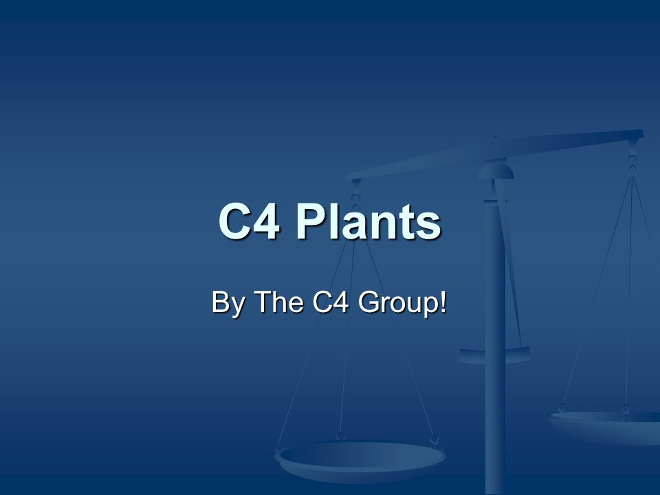 C4 Plants By The C4 Group!