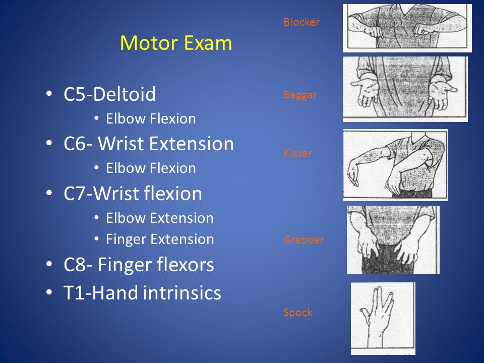 Motor Exam C5-Deltoid Elbow Flexion C6- Wrist Extension Elbow Flexion C7-Wrist flexion Elbow Extension Finger Extension C8- Finger flexors T1-Hand int