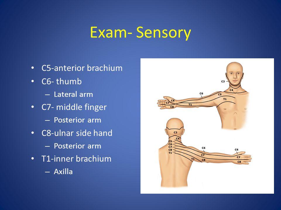 Exam- Sensory C5-anterior brachium C6- thumb – Lateral arm C7- middle finger – Posterior arm C8-ulnar side hand – Posterior arm T1-inner brachium – Ax