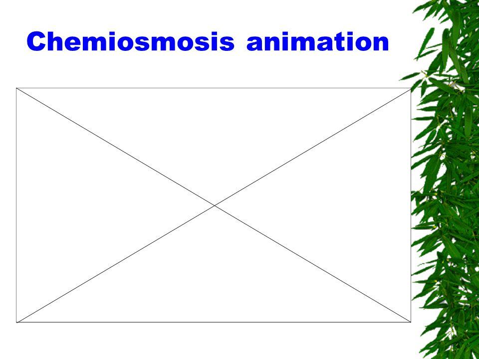 Chemiosmosis animation
