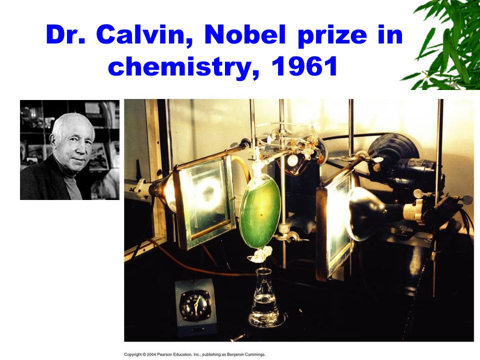 Dr. Calvin, Nobel prize in chemistry, 1961