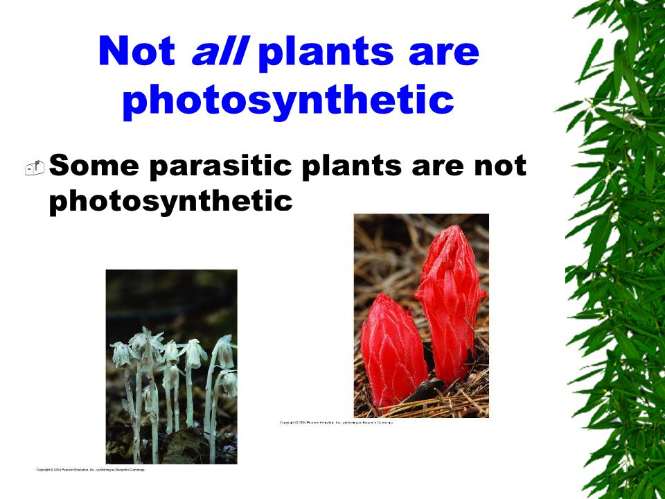 Not all plants are photosynthetic  Some parasitic plants are not photosynthetic