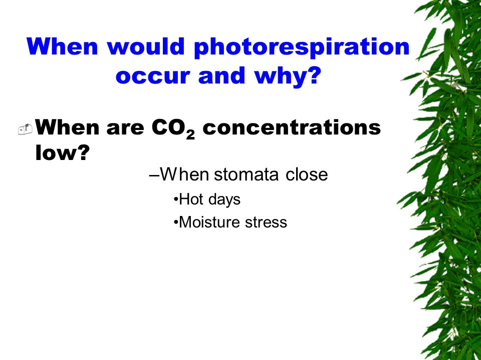 When would photorespiration occur and why.  When are CO 2 concentrations low.