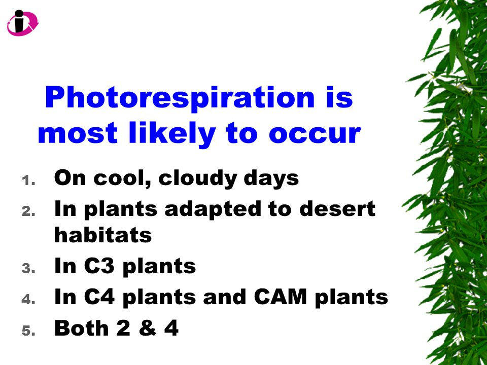 Photorespiration is most likely to occur 1. On cool, cloudy days 2.
