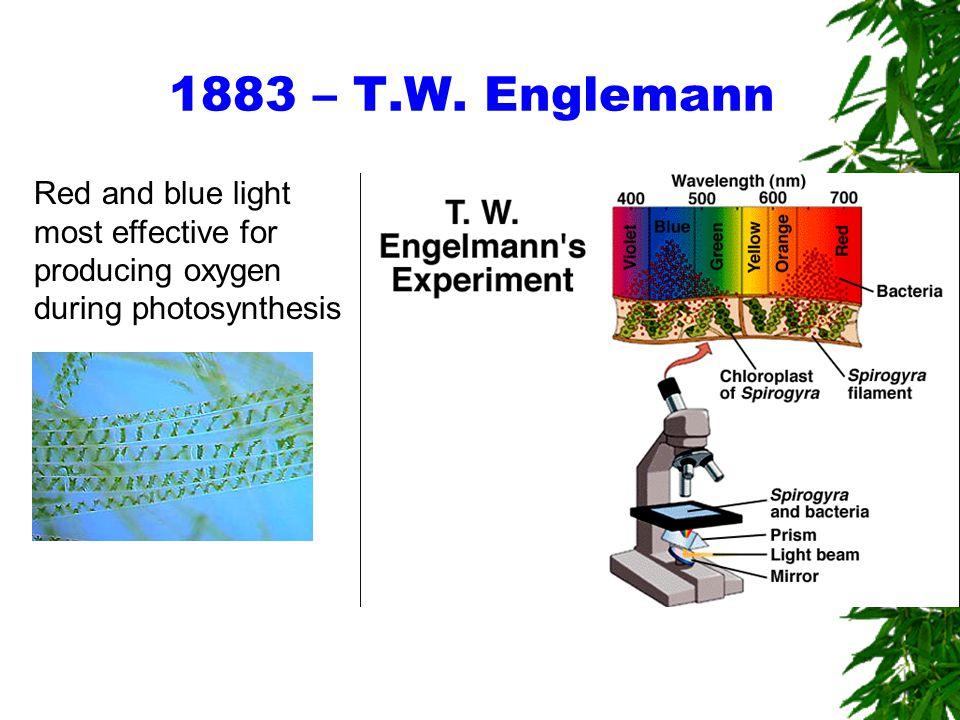 Wavelength and photosynthesis