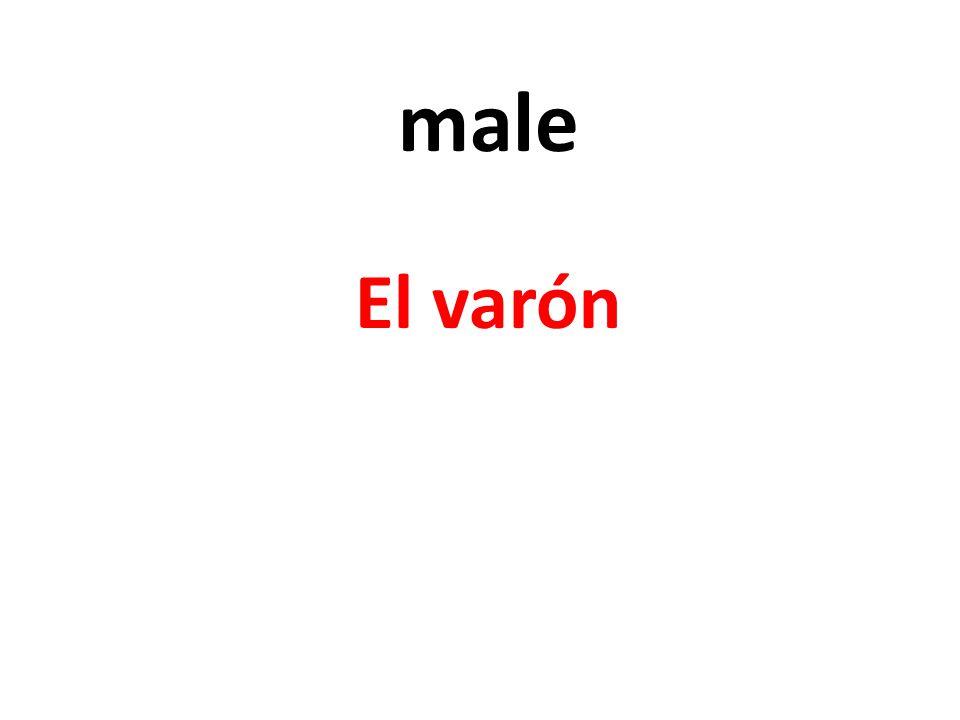 male El varón