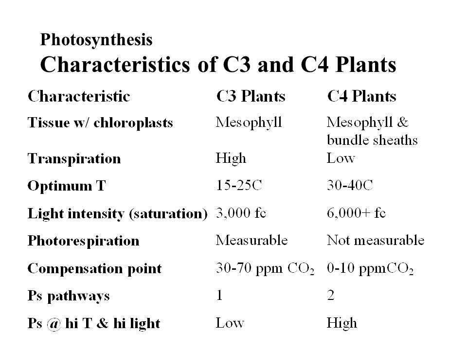 Photosynthesis Characteristics of C3 and C4 Plants
