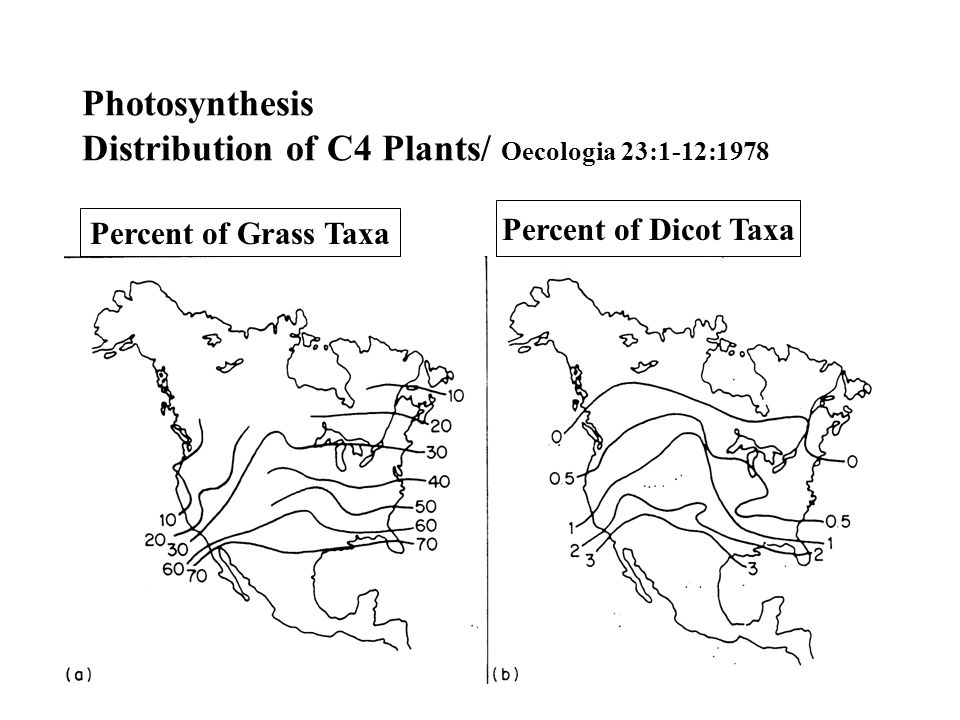Photosynthesis Distribution of C4 Plants/ Oecologia 23:1-12:1978 Percent of Grass Taxa Percent of Dicot Taxa