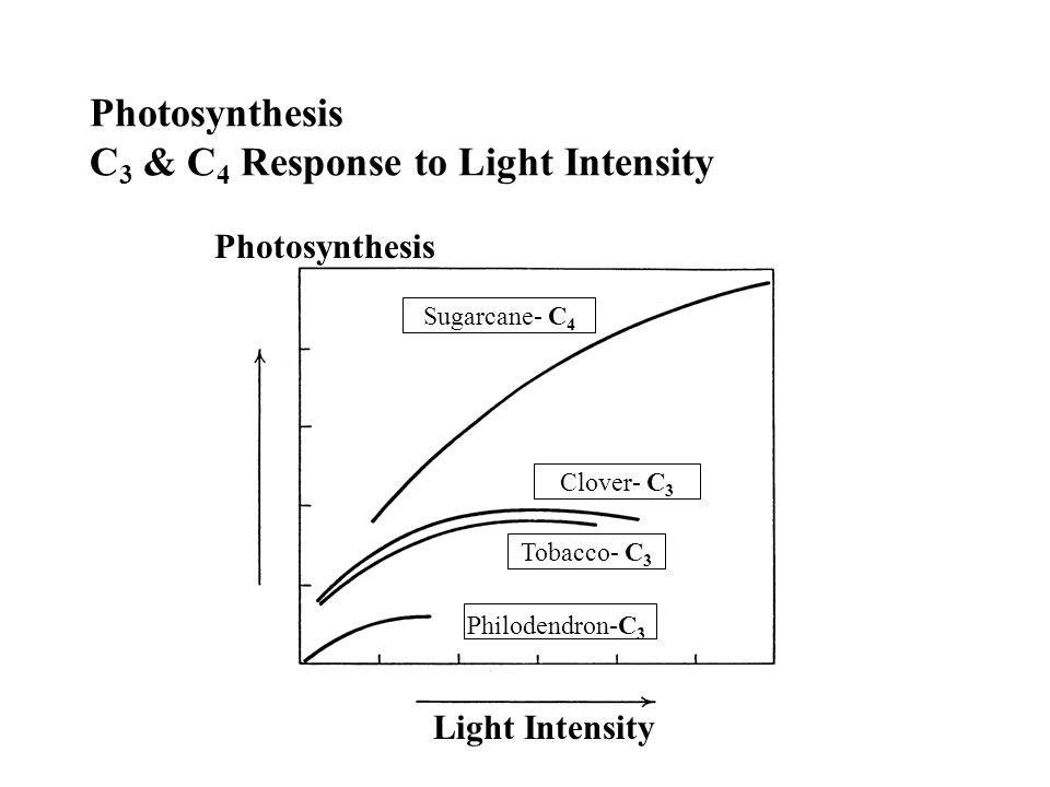 Photosynthesis C 3 & C 4 Response to Light Intensity Light Intensity Photosynthesis Sugarcane- C 4 Clover- C 3 Tobacco- C 3 Philodendron-C 3