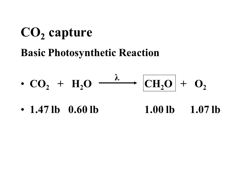 Photosynthesis Action Spectra of Lights vs Chl a & b Absorption Incandescent light Cool white fluorescent light Chlorophyll A & B