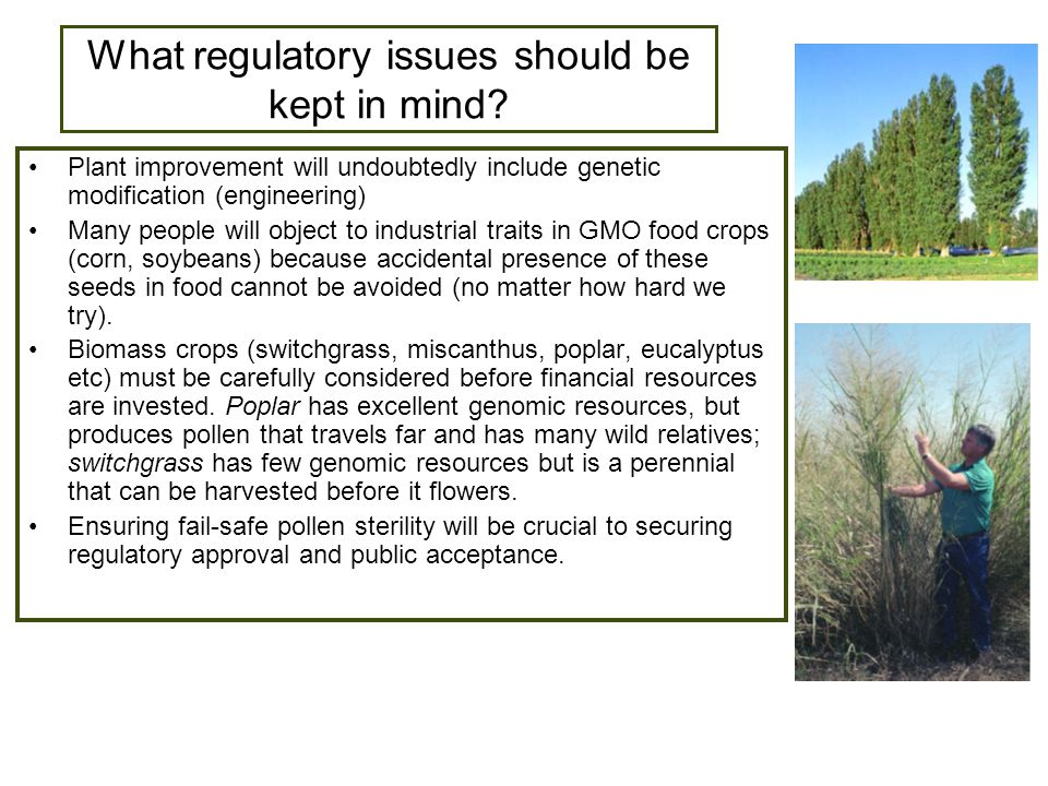 What regulatory issues should be kept in mind.