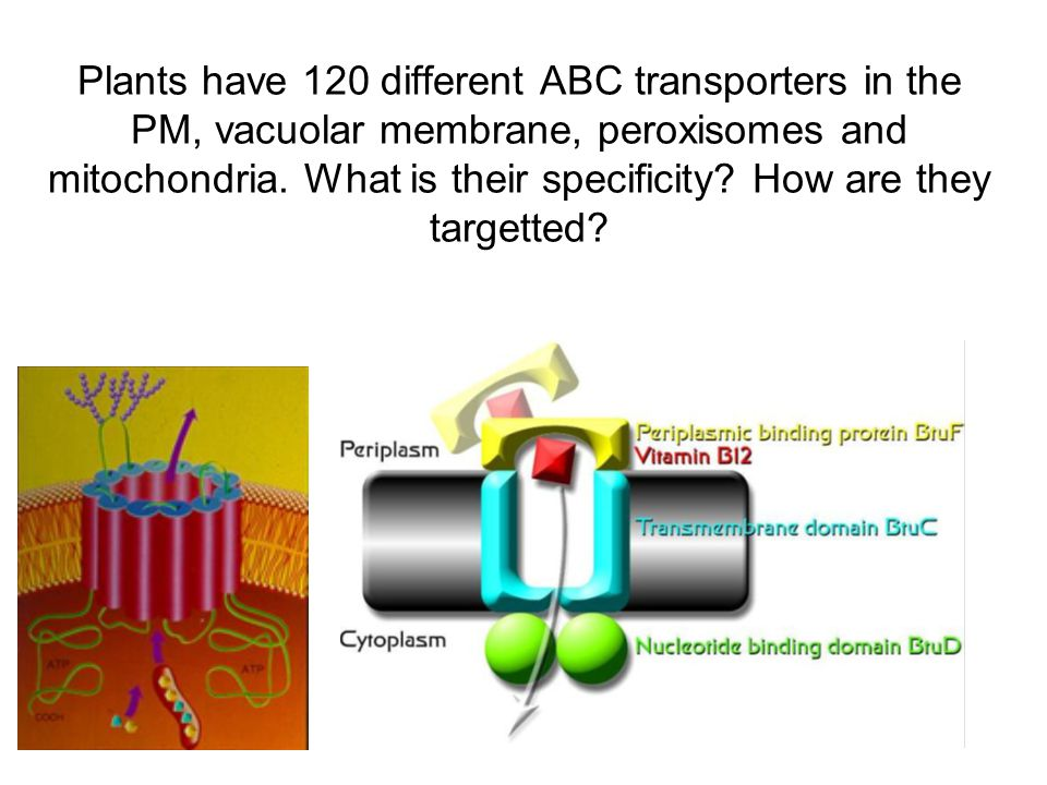 Plants have 120 different ABC transporters in the PM, vacuolar membrane, peroxisomes and mitochondria. What is their specificity? How are they targett