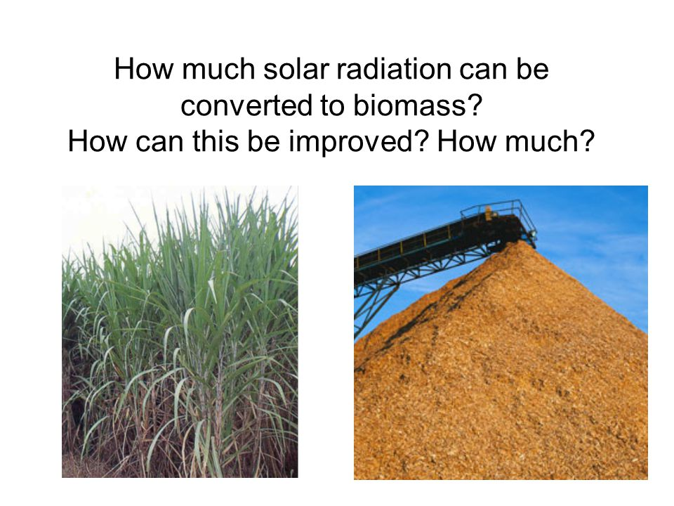 How much solar radiation can be converted to biomass? How can this be improved? How much?