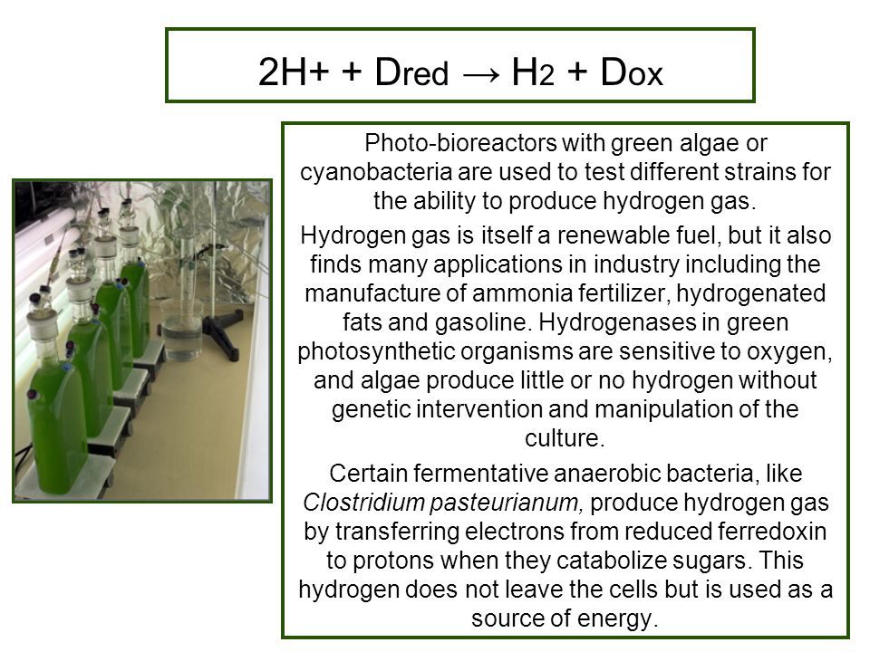 2H+ + D red → H 2 + D ox Photo-bioreactors with green algae or cyanobacteria are used to test different strains for the ability to produce hydrogen ga