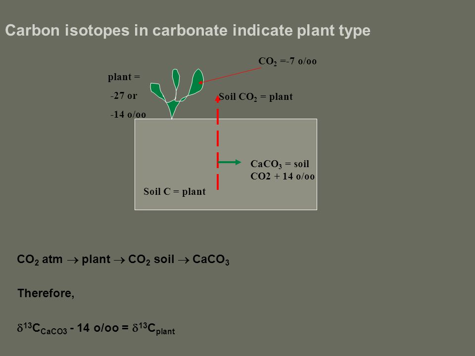 Carbon isotopes in carbonate indicate plant type CO 2 atm  plant  CO 2 soil  CaCO 3 Therefore,  13 C CaCO3 - 14 o/oo =  13 C plant CO 2 =-7 o/oo plant = -27 or -14 o/oo Soil C = plant Soil CO 2 = plant CaCO 3 = soil CO2 + 14 o/oo