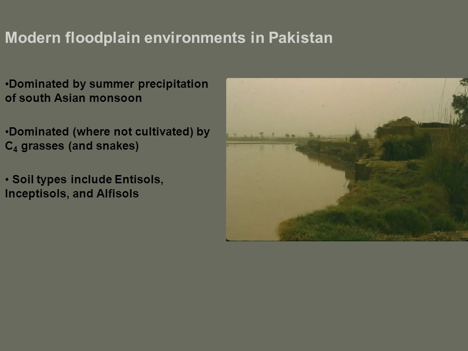 Modern floodplain environments in Pakistan Dominated by summer precipitation of south Asian monsoon Dominated (where not cultivated) by C 4 grasses (and snakes) Soil types include Entisols, Inceptisols, and Alfisols