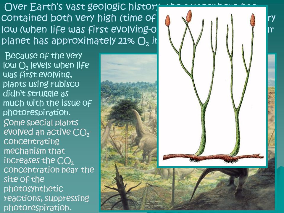 Over Earth's vast geologic history, the atmosphere has contained both very high (time of dinosaurs >50%), and very low (when life was first evolving-0