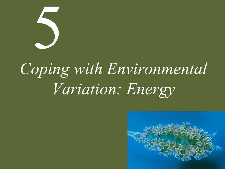 Figure 5.19 Conceptual Model of Optimal Foraging