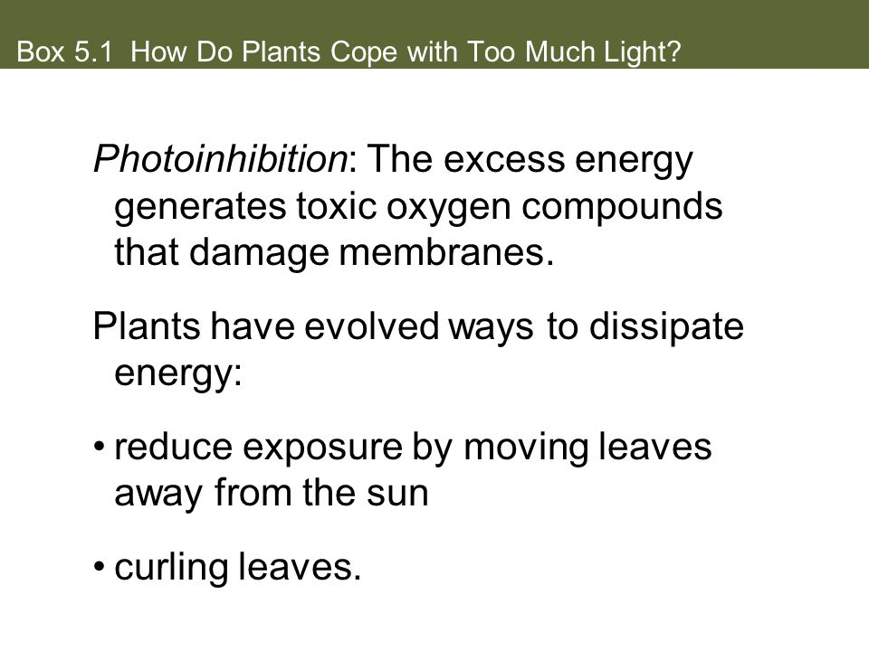 Box 5.1 How Do Plants Cope with Too Much Light.