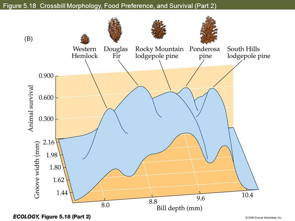 Figure 5.18 Crossbill Morphology, Food Preference, and Survival (Part 2)