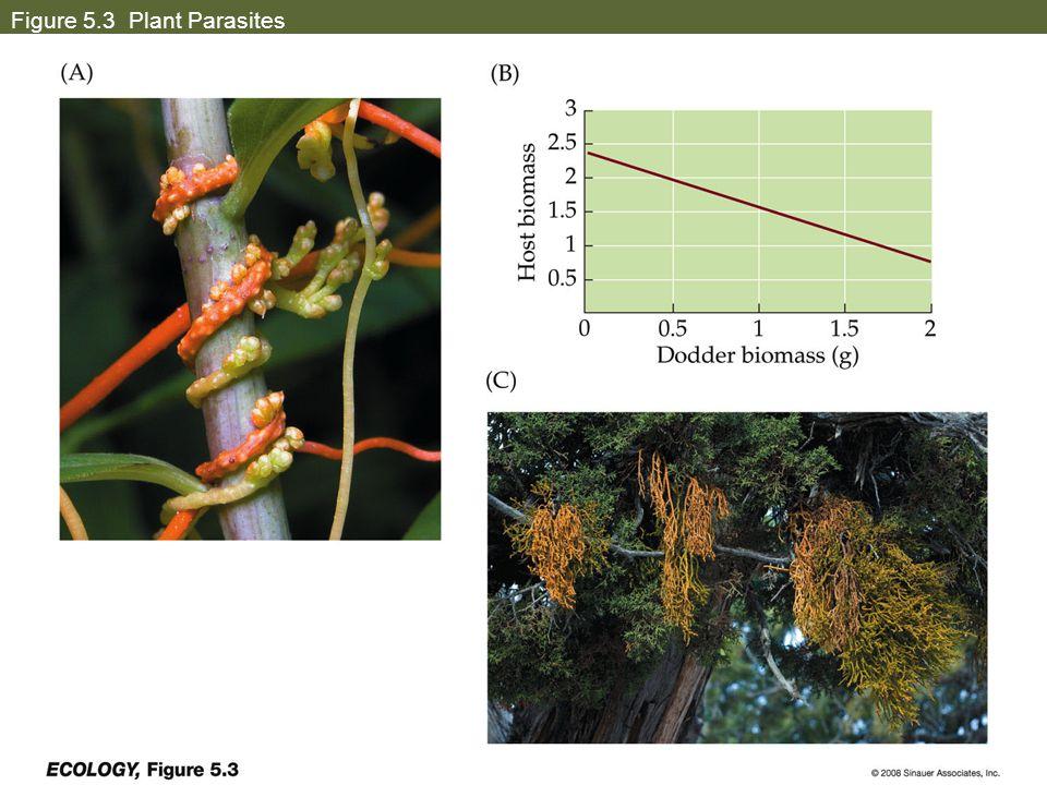 Figure 5.3 Plant Parasites