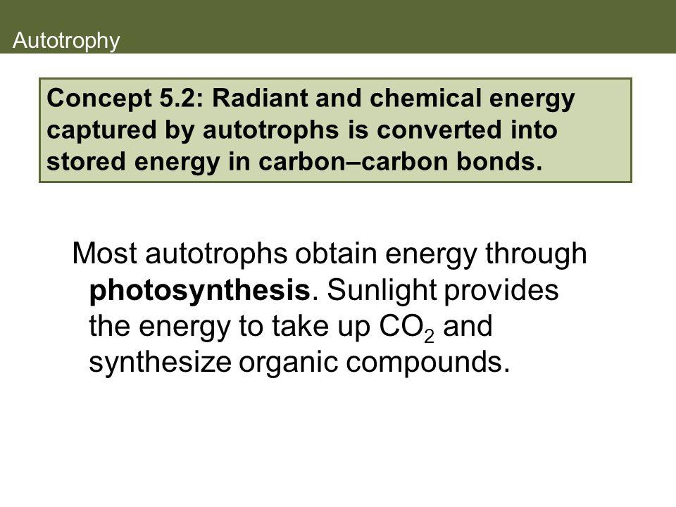 Autotrophy Most autotrophs obtain energy through photosynthesis.