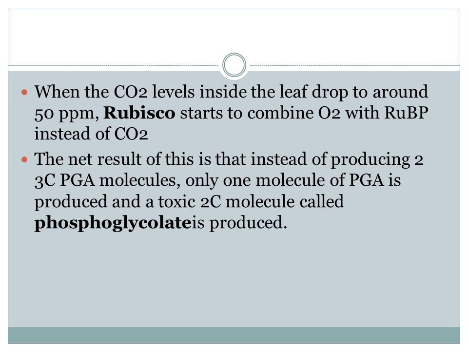 When the CO2 levels inside the leaf drop to around 50 ppm, Rubisco starts to combine O2 with RuBP instead of CO2 The net result of this is that instead of producing 2 3C PGA molecules, only one molecule of PGA is produced and a toxic 2C molecule called phosphoglycolateis produced.