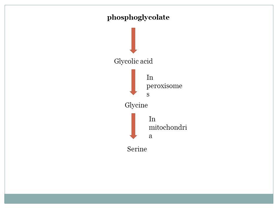 phosphoglycolate Glycolic acid Glycine In peroxisome s Serine In mitochondri a