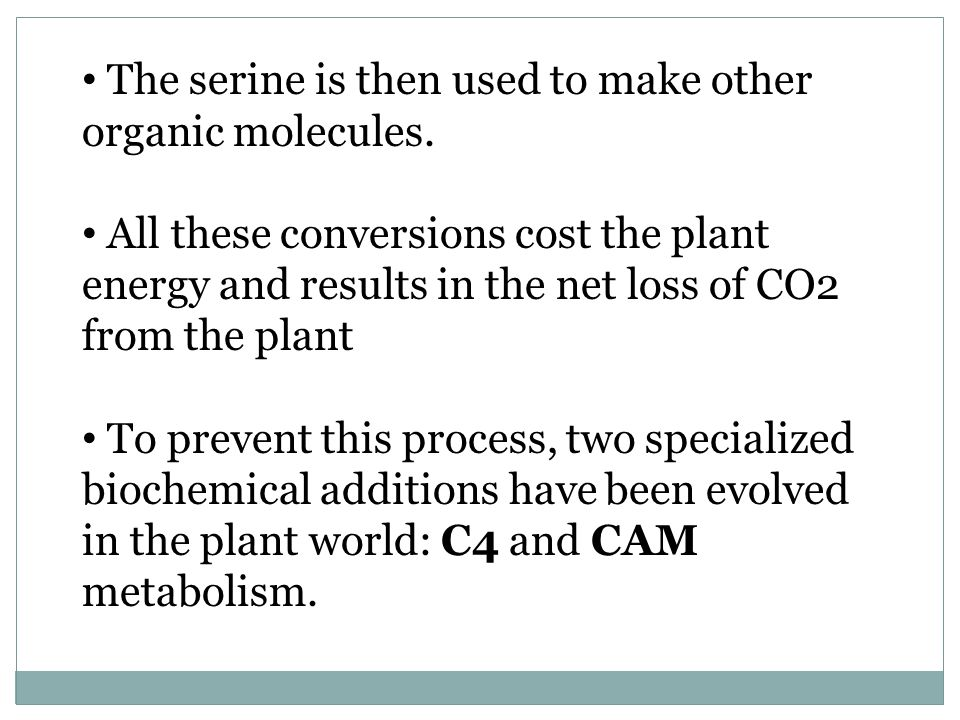 The serine is then used to make other organic molecules. All these conversions cost the plant energy and results in the net loss of CO2 from the plant