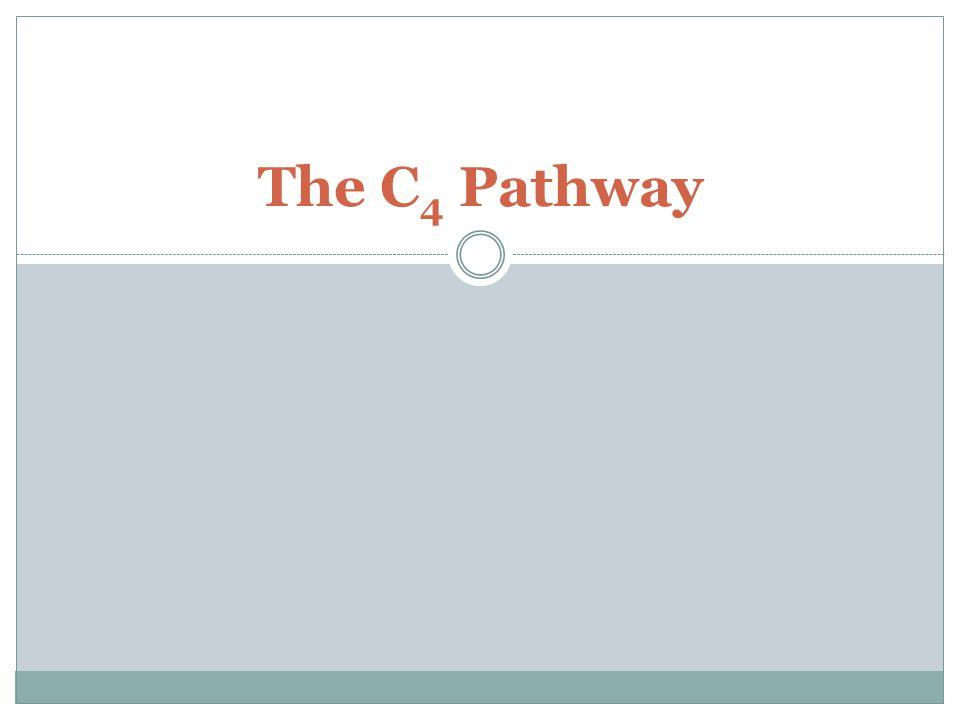 The C 4 Pathway
