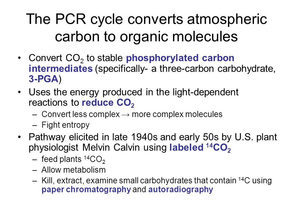 The PCR cycle converts atmospheric carbon to organic molecules Convert CO 2 to stable phosphorylated carbon intermediates (specifically- a three-carbon carbohydrate, 3-PGA) Uses the energy produced in the light-dependent reactions to reduce CO 2 –Convert less complex → more complex molecules –Fight entropy Pathway elicited in late 1940s and early 50s by U.S.